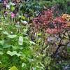 「佐久の季節便り」、秋晴れ、「柿採り日和」に…・