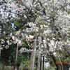 4月27日(日)花曇り・団地の清掃