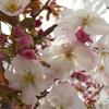 今年は普段咲かない花が咲きます
