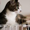 アクアリウムとネコ飼育の相性とは? 〜気をつけるべきポイント〜