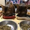 【ズボラ主婦】家にこもって過ごす一日【猫さんと暮らす】