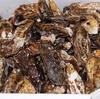 初物牡蠣と酢ダイダイ