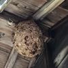 浜松市で軒下に出来たキイロスズメバチの巣を駆除してきました!
