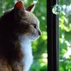 私の世界 10.猫と花