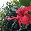 5月より日本一周します!【人の可能性に花が咲く】場所を創るために。