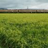 新潟で寄り道鉄② 越後線で115系の撮影