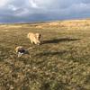 ボールをとってこさせようと 犬を訓練しています  根室半島 北海道