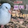 【レポ#13】これで入園料無料!?野毛山動物園現地レポート(2020/10/24)【動物園】