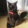 今日の黒猫モモ&白黒猫ナナの動画ー1062