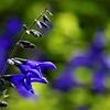 季節の花(水無月1)