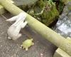 失敗もオッケー!ウサギと亀の童話に中国人の寛容さを感じた話