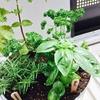 【無印良品】トタンのバケツでベランダ菜園はじめました。