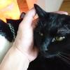 今日の黒猫モモ&白黒猫ナナの動画ー811