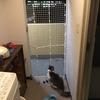 【DIY】【安上がり】ダイソーグッズだけで玄関に猫脱走防止扉(フェンス)を自作