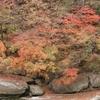 トロッコわたらせ渓谷号で見る紅葉の絶景と列車レストラン