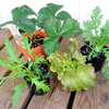 冬の野菜作り