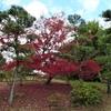 万博記念公園・日本庭園の紅葉を観に行く②観光102...20201122