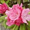花の名前 訂正の訂正 今日の私はバリバリのセルフネグレクト