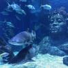 ブルームーンの31日はAISプロモでシーライフ・バンコク水族館&お寺でロイクラトン♪