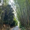 【街歩き】【ぶらぶら散歩】ちょこっと西京区に