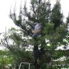 庭木の剪定教室(その2)