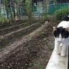 2020'秋野菜へ‥ ~Transition to fall vegetables