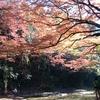 久里浜〜浜金谷〜鯛の浦〜養老渓谷サイクリング。いざ!紅葉狩り!