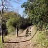 衣笠山で野鳥観察@RX10m4