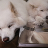 ○美しい犬