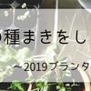 水菜の種まきをしました~2019プランター栽培1~