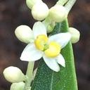 植物の生長記録 by YASAI18
