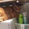 猫の多頭飼いにおける相性問題:別居生活
