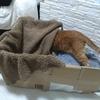 ダンボールとアルミシートで寒さ対策!猫ハウス作り。