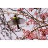 東京で出会える野鳥たち––スズメくらいの大きさの小鳥編
