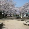 友人と佐賀市大和町にある築山児童公園に花見に行ってきました。