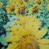 葡萄と向日葵~喧噪のバンコクを離れて花と果実に会いに行く