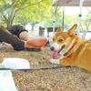 愛犬と行けるおすすめキャンプ場【けんぶち絵本の里家族旅行村キャンプ場】