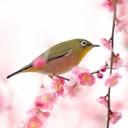 オールインワンのエイジングケアなら【和えか】☆日本の伝統美をあなたにも♪