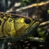 キラキラネームは大人になったら改名できる出世魚システムにすべき