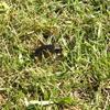 芝に集まる昆虫たち