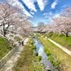 絶景、玉川の桜並木! 京都府井手町(25/1741)