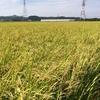 9月22日のブログ「ユックリとした12キロのジョグ、わが家の稲刈り」