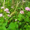 湿地の花、二週間後(2018/10/上旬)