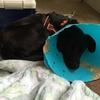 不妊手術・狂犬病注射完了➡︎湘南いぬ親会参加🔥