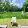 日光だいや川公園 とんぼ池・しらさぎ池(栃木県日光)