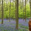 【告知】4月26日(日)アチャン・ニャーナラトー師 オンライン「法話と瞑想の会」