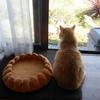 畑猫ダイちゃんの復活。