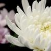 1分でわかる!仏壇にお供えする花について注意点