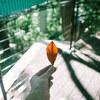 上野動物園の中心で葉っぱをもらう