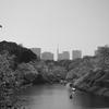 全国3位のお花見スポット、千鳥ヶ淵~靖国神社へのお花見散歩(A cherry blossom viewing walk from Chidori-gabuchi to Yasukuni Shrine, the third-largest cherry-blossom viewing spot in Japan)